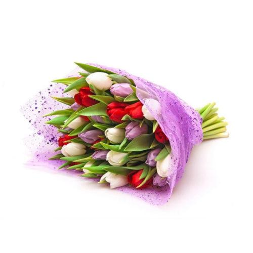 Tulipani_Adriana