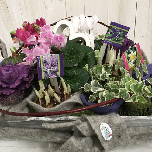 Composzione_piante_fiorite_deborah