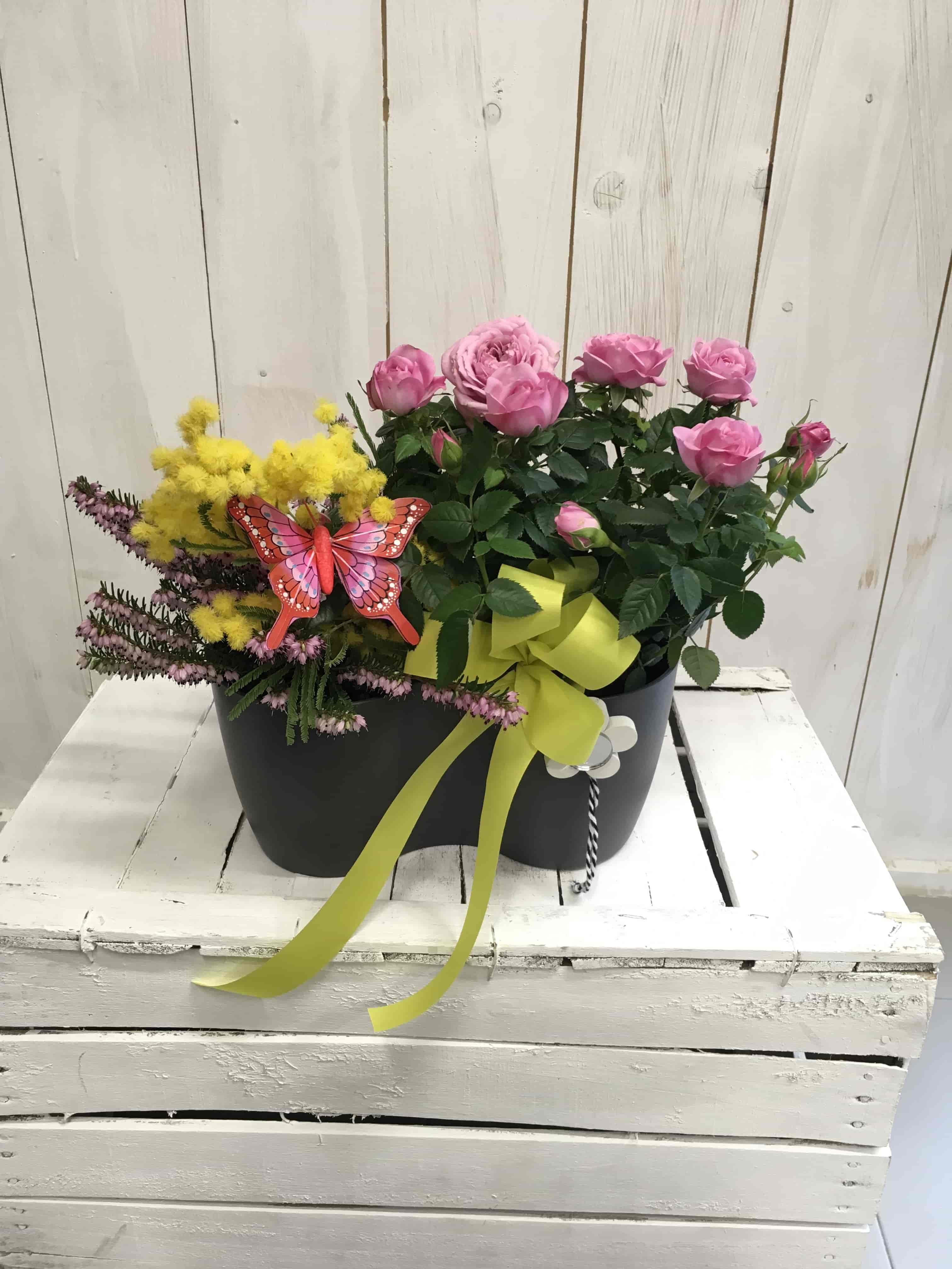 Piante_fiorite_mimosa